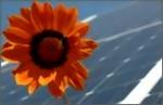 solarblume-medium